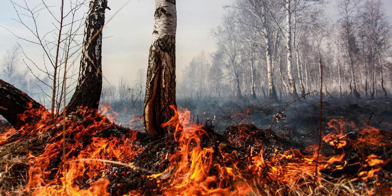 Why we should worry about the Arctic burning